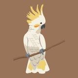 Cockatoo bird exotic branch Stock Photo