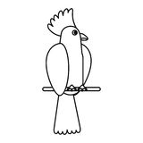 Cockatoo bird tropical thin line Stock Images
