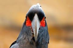 Cockatoo de la palma Imágenes de archivo libres de regalías