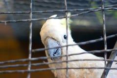 Cockatoo en jaula foto de archivo libre de regalías