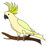 Cockatoo. Illustration of a cockatoo standing in profile on a tree vector illustration