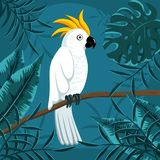 Cockatoo parrot on branch in jungle. Cute cockatoo bird on a branch in tropical forest. Bird surrounded by monstera palm and banana leaves. Vector illustration royalty free illustration
