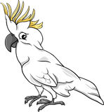 Cockatoo parrot cartoon illustration Stock Images