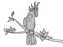 Cockatoo parrot coloring book for adults vector. Cockatoo parrot bird coloring book for adults vector illustration. Zentangle style. Black and white lines. Lace royalty free illustration