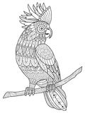 Cockatoo parrot coloring book for adults vector Stock Photos