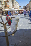 Cockatoo and parrot in the old town of rhodes Stock Images