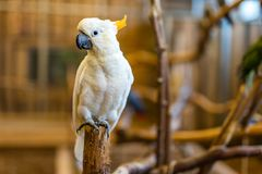 One happy Cockatoo parrot on perch with blurred background stock images