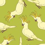 Cockatoo  pattern Stock Photo