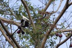 cockatoos Стоковая Фотография