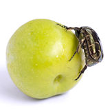 Cockchafer on a green plum. Stock Image