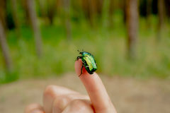 Cockchafer on man s hand. Green may-bug on a hand at the girl stock image