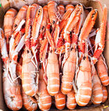 Cocked langoustine ready to eat Stock Images