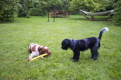 Cocker anglais et chien de berger néerlandais ensemble photos libres de droits