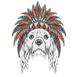 Cocker in the colored Indian roach. Indian feather headdress of eagle. Hand draw vector  illustration Stock Photography