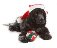 Cocker de la Navidad Fotos de archivo libres de regalías