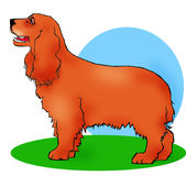 Cocker spaniel. Cartoon Cocker computer generated illustration royalty free illustration