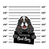 Cocker Spaniel bad boy. Dog criminal. Arrest photo. Police records. Dog prison. Police mugshot background. Vector. Cocker Spaniel bad boy. Dog criminal. Arrest vector illustration