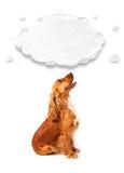 Cocker spaniel bonito com nuvem Imagens de Stock Royalty Free