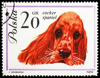Cocker-Spaniel (Canis lupus familiaris), Dogs serie, circa 1963. MOSCOW, RUSSIA - MAY 25, 2019: Postage stamp printed in Poland shows Cocker-Spaniel (Canis lupus stock image