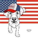 Cocker spaniel en un casquillo americano Perrito en el fondo de la bandera americana Ilustración del vector