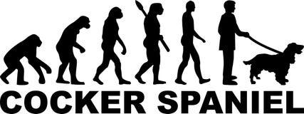 Cocker Spaniel evolution med namn vektor illustrationer