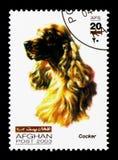 Cocker spaniel (familiaris) di canis lupus, serie dei cani, circa 2003 Fotografie Stock
