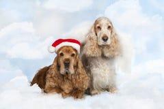 Cocker spaniel-Hund mit zwei Englisch auf Weihnachten stockbilder