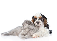 Cocker Spaniel puppy embracing young kitten. isolated on white b. Ackground Royalty Free Stock Image