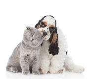 Cocker Spaniel puppy licking young kitten. isolated on white. Background stock photos