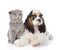 Cocker Spaniel puppy lying with young kitten. isolated on white.  Stock Photo