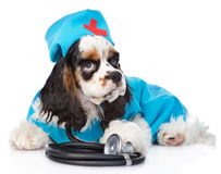 Cocker Spaniel puppy wearing hat doctor with stethoscope on his Stock Image