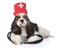 Cocker Spaniel puppy wearing hat doctor with stethoscope. isolated Royalty Free Stock Photos