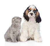 Cocker Spaniel puppy with young kitten. Focus on cat. Isolated on ehite. Cocker Spaniel puppy with young kitten. Focus on cat. Isolated on white royalty free stock images