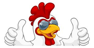 Cockerel κοκκόρων κοτόπουλου κινούμενα σχέδια γυαλιών ηλίου πουλιών διανυσματική απεικόνιση