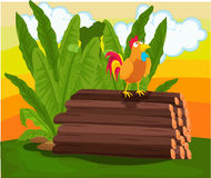 Cockerel Stock Image