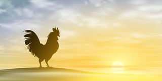 Cockerel, Rooster. Royalty Free Stock Image