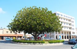Cockerel sculpture and very old big tree on the Limassol square, Cyprus royalty free stock photo