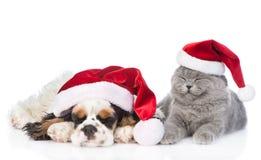 Cockerspanielvalp och mycket liten kattunge med gåvaasken som sover i röda santa hattar bakgrund isolerad white Royaltyfri Foto