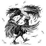 Cockfight lub gamecocks Ptasi sport na gospodarstwie rolnym Ręka rysujący grawerujący nakreślenie zwierzęta domowe w rocznika sty ilustracji
