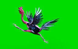 A cockfight moving and jumping Royalty Free Stock Images