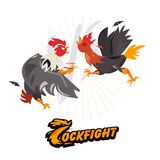 Cockfighting. character design come with typographic for infogra Royalty Free Stock Photo