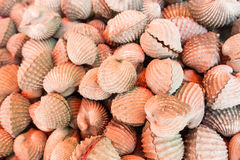 Cockle. Scallops mixed together beautifully seafood Stock Photo