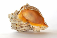 Cockle-shell Royalty Free Stock Photography
