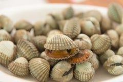 Cockle shell Stock Photos