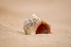 Cockle-shell Royalty Free Stock Images