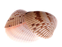 Cockle shell stack Stock Photos