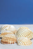 Cockle Shells on sand Stock Photography