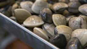 Cockles θαλασσινών κοχυλιών κινηματογράφηση σε πρώτο πλάνο Φρέσκα προϊόντα θαλασσινών Delishious απόθεμα βίντεο