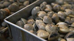 Cockles θαλασσινών κοχυλιών κινηματογράφηση σε πρώτο πλάνο Φρέσκα προϊόντα θαλασσινών Delishious φιλμ μικρού μήκους