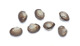 Cockles Stock Photo